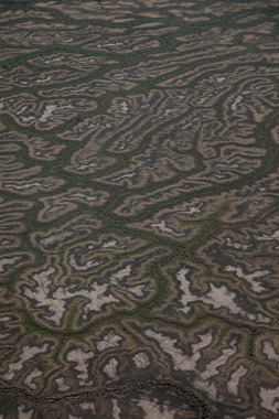 7. <strong>Richard Woldendorp</strong>, <em> Aerial, Cooper's Creek flood plain near Windorah, Queensland</em>, 2009, 1/7<br> inkjet colour prints, 71 x 50 cm<br>$3000